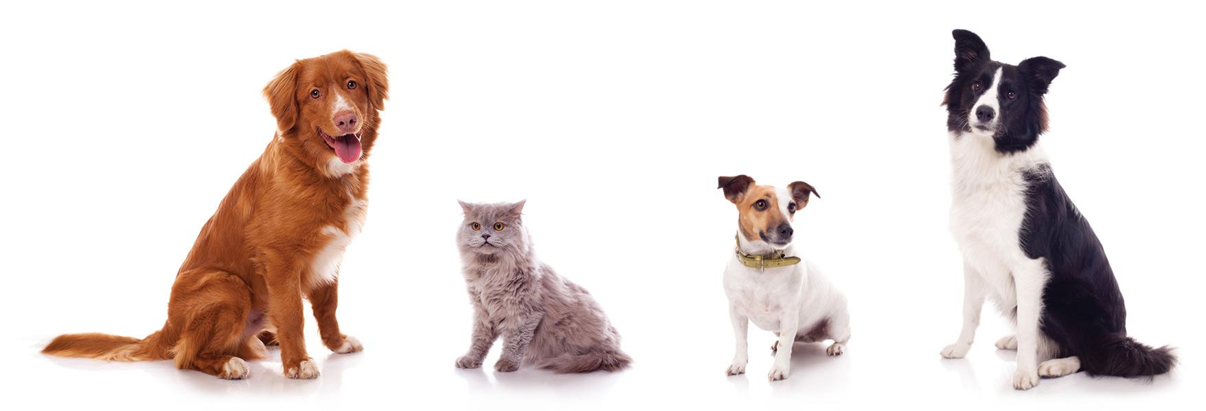 KLEINERAKKERS / Katten- en Hondenfotograaf