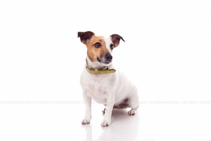 Hondenfotograaf / Hondenfotografie - KLEINE RAKKERS - JACK RUSSEL - LUNA
