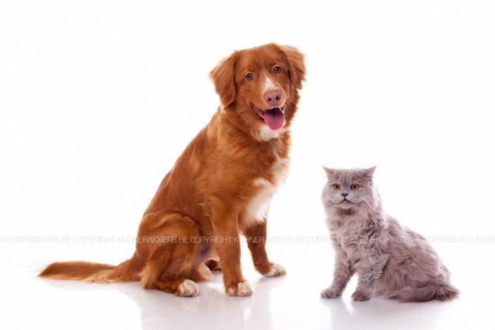 Hondenfotograaf / Hondenfotografie - KLEINE RAKKERS
